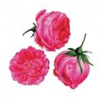 Puzzle-Michele-Wilson-A179-150 Puzzle en Bois - François-Joseph Redouté : Trois Roses