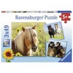 Ravensburger-08011 3 Puzzles - Chevaux