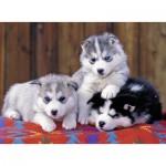 Puzzle  Ravensburger-12823 Pièces XXL - Mignons Huskies