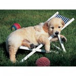 Puzzle  Ravensburger-14179 Golden Retriever : Pause sieste