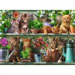 Puzzle  Ravensburger-14824 Des chats sur l'Etagère