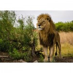 Puzzle  Ravensburger-15160 Nature Edition No 14 - Lion