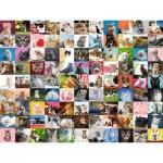 Puzzle  Ravensburger-16235 99 Chats