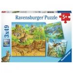 3 Puzzles - Animaux dans leurs Habitats