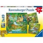 3 Puzzles - Jungle Animals