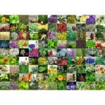 Puzzle   99 Herbes et Epices