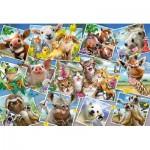 Puzzle  Schmidt-Spiele-56294 Selfies Animaux