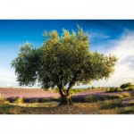 Puzzle  Schmidt-Spiele-58357 Olivier en Provence