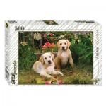 Puzzle  Step-Puzzle-78076 Labradors