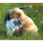Puzzle  Sunsout-54984 Perfect Friendship