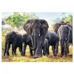 Puzzle  Trefl-10442 Éléphants africains