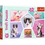 Puzzle  Trefl-13247 Chats