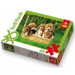 Puzzle  Trefl-17166 Chiots Beagle : un adorable panier