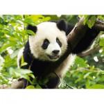 Puzzle  Trefl-37142 Panda géant